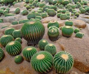 Cactus Maintenance